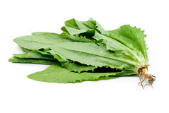 Lactuca sativa L on white background. 。 Royalty Free Stock Photos