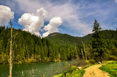 Lacul Rosu, λίμνη βουνών στο βαθύ δάσος Στοκ Φωτογραφίες