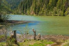 Lacul Rosu - Czerwony jezioro, Wschodni Carpathians, Rumunia Obrazy Stock