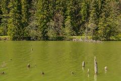 Lacul Rosu - lago vermelho, Carpathians orientais, Romênia Fotografia de Stock
