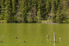Lacul Rosu - roter See, Ost-Karpaten, Rumänien Stockfotografie