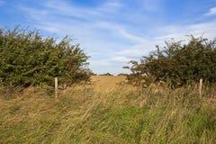 Lacuna e paesaggio della siepe di arbusti Immagini Stock