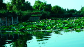 Lacustrine Landscape With Lotus Leaves hypnotic waves. Serene Lacustrine Landscape With Lotus Leaves stock video footage