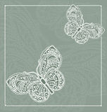 Lacy butterfly Stock Image