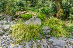 Lacy Plants And Rocks. Lacy plant grow between rocks in a garden in Seatac, Washington stock image