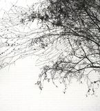 Lacy Urban Tree Silhouette fotografie stock