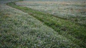 Ślad na trawie Zdjęcia Stock