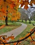 Ślad przez drzew Zdjęcie Royalty Free