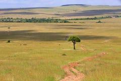 Ślad przy masai Mara parkiem narodowym Zdjęcia Stock
