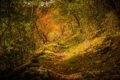 Ślad w drewnach w jesieni Zdjęcie Royalty Free