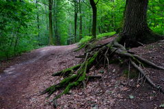 Ślad w lesie Obrazy Stock