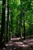 Ślad w lesie Zdjęcie Stock