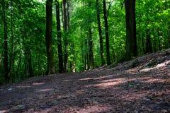 Ślad w lesie Zdjęcia Stock