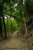 Ślad w lesie i bambusie Zdjęcia Royalty Free