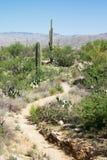 Ślad w Saguaro parku narodowym, Arizona Zdjęcia Stock