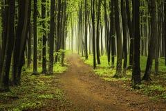 Ślad w wiosna lesie Fotografia Royalty Free