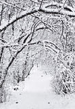 Ślad w zima Zdjęcie Royalty Free