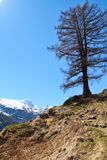 Ślad wysoki w Szwajcarskich Alps Obraz Stock