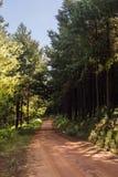 Ślada w lesie Obrazy Stock