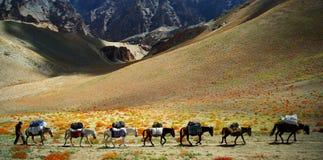 Ladakh Stock Image