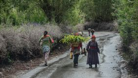 Tibetan people walking on rural road royalty free stock image