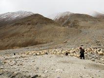 Ladakhi牧人和山羊 图库摄影