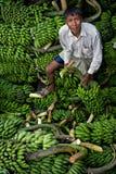 Ladda bananer för man - Rangamati Arkivbilder