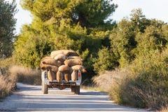 Laddad lastbil för grekOlive Olea europaea skörd Arkivbilder