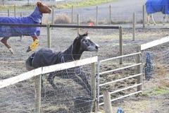 Laddande port för häst Royaltyfri Bild
