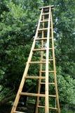 Ladder Stock Photos