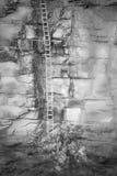 Ladder aan nergens Royalty-vrije Stock Fotografie