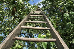 Ladder in an apple Stock Photography