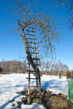 Ladder and apple tree in winter garden Stock Images
