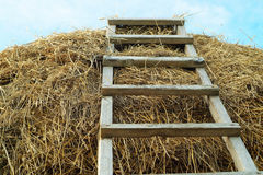 The ladder conducting on a haystack Stock Photography