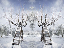 Ladder covered with snow leaning against a tree Stock Image