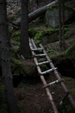 Ladder in the dark forest royalty free stock photography