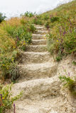 The ladder from the earth.Stairs in the field.Wild field. Close-up. Royalty Free Stock Photo