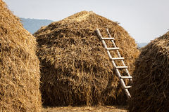 Ladder haystack. A very interesting composition, with the ladder to symbolise progress & promotion Stock Image