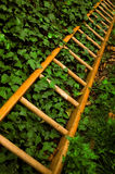 Ladder and ivy. Wooden ladder in the garden surrounded by ivy stock photography