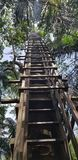 Ladder leading up into treehouse stock images