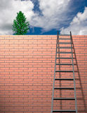 Ladder leans on wall Stock Images