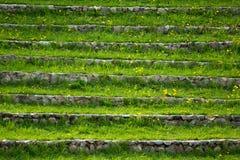 Ladder met een gras en paardebloemen Royalty-vrije Stock Afbeelding