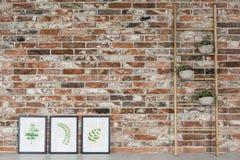 Ladder met installaties royalty-vrije stock foto's