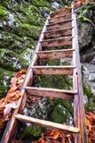 Ladder Royalty Free Stock Photos