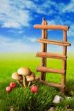 Ladder, paddestoelen en vruchten op de weide Stock Afbeelding