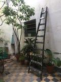 Ladder on patio Stock Photo