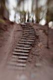 Ladder in Pavlovsk Park stock fotografie