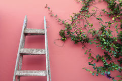 Ladder on a pink wall Royalty Free Stock Photo