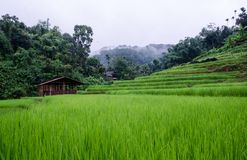 Ladder Rice Fields At Mae Hong Son Thailand Royalty Free Stock Photography