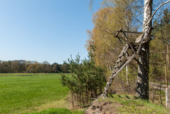 Ladder stand at a birch Royalty Free Stock Photography